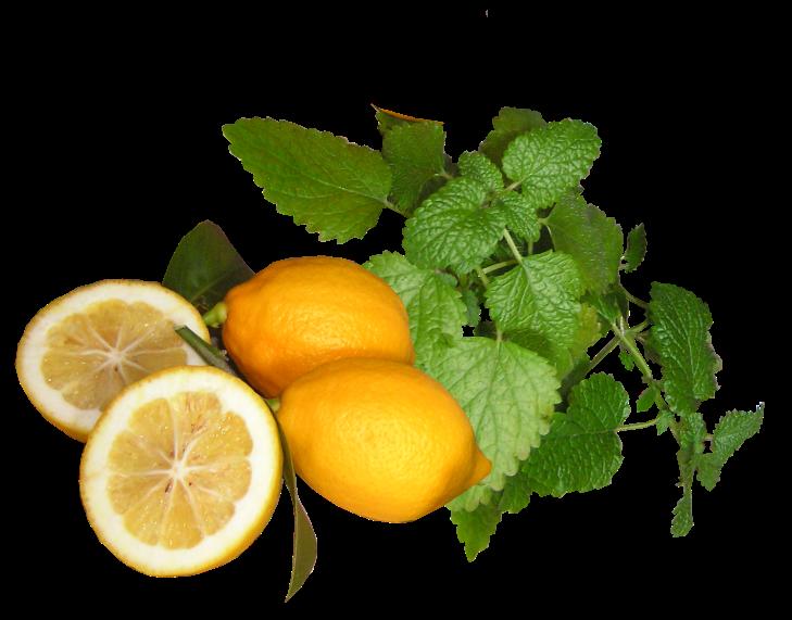 lemons-2536895_1920.png